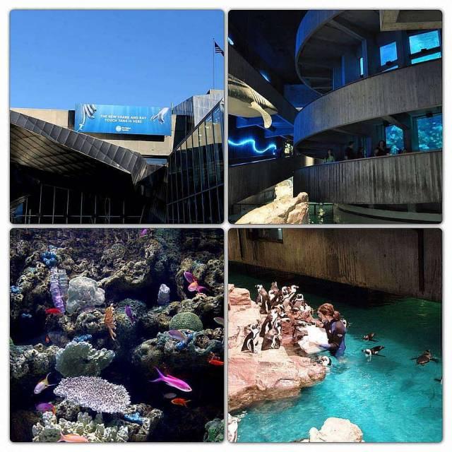 5. New England Aquarium
