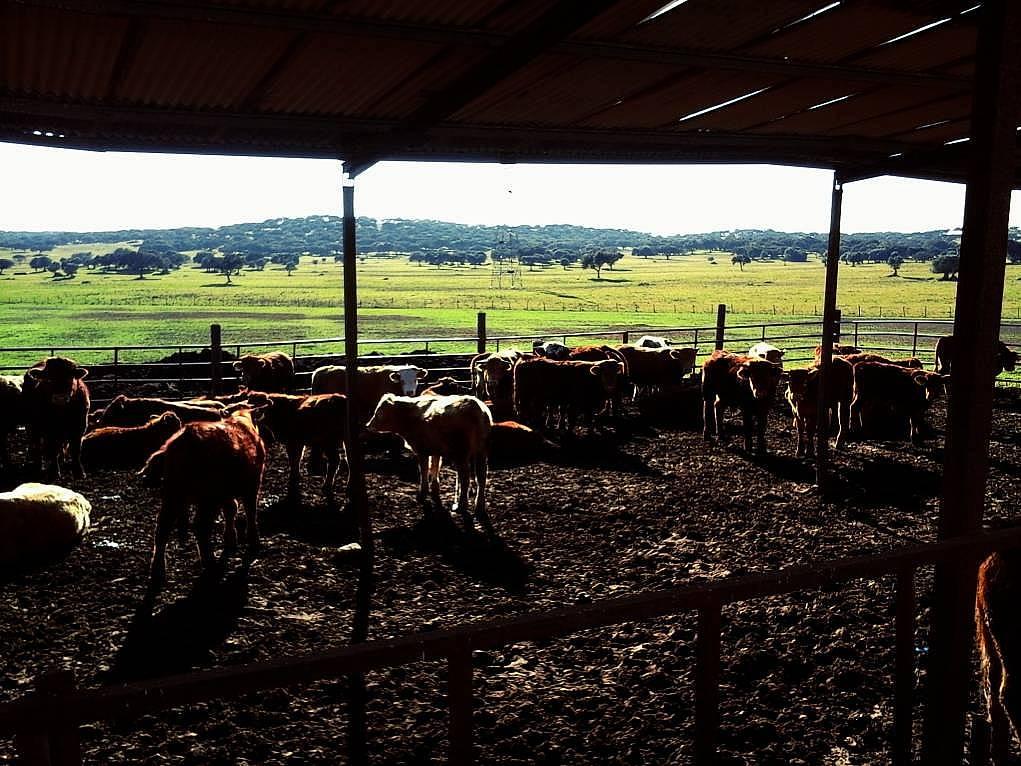 5. Mangal yaparız umuduyla gittiğim çiftlik gezim...