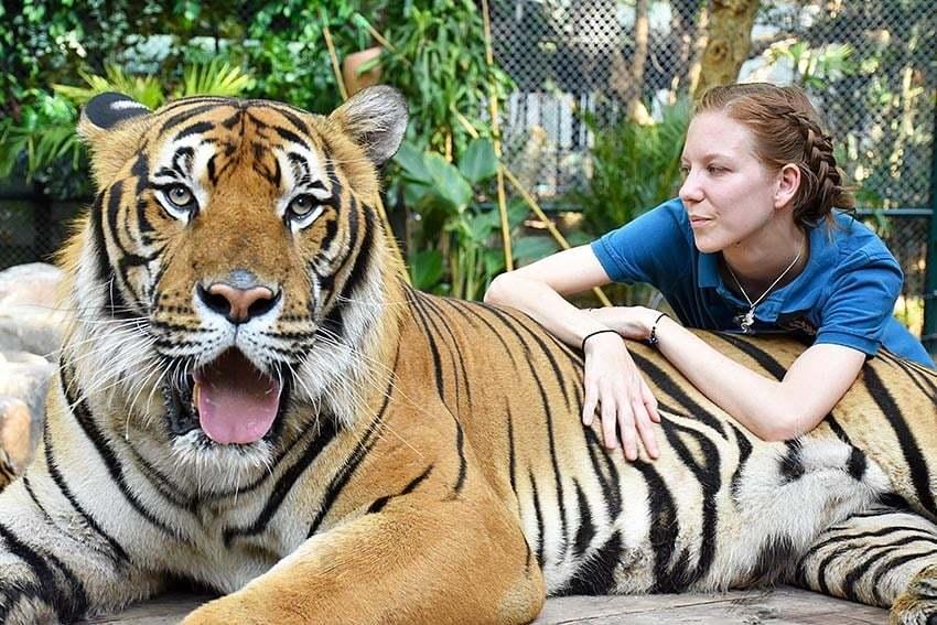 3. Tiger Kingdom'da aslanlara sarılmak.