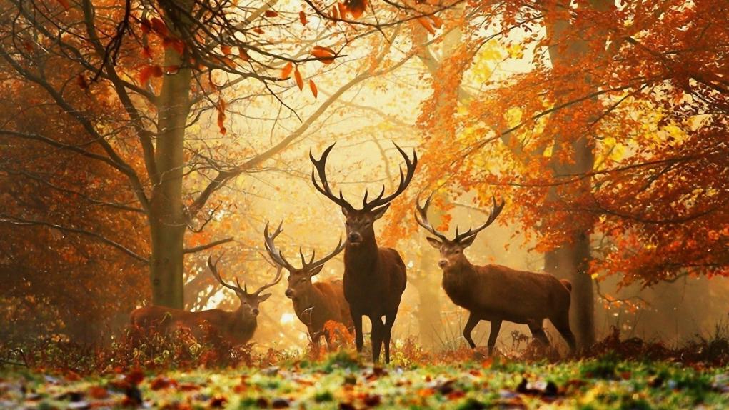 5. Letonya, Avrupa'nın en yeşil ülkelerinden biridir.