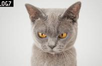 Kedilerle İlgili Bilmeniz Gereken 10 İngilizce Deyim